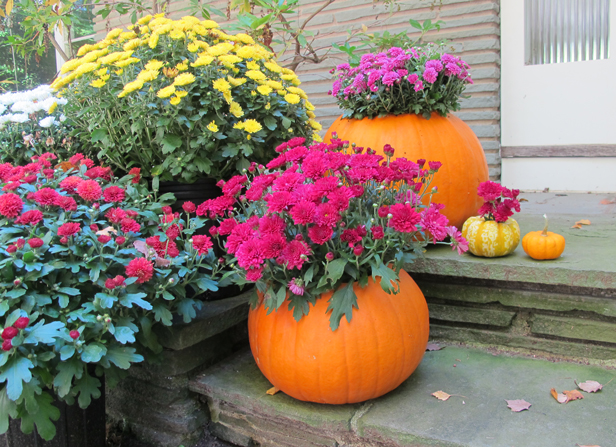 How to make a fall DIY pumpkin planter for mums and other autumn plants.