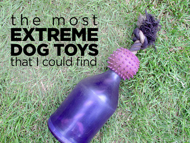 Try these tough toys if you have a dog that loves to chew + destroy!