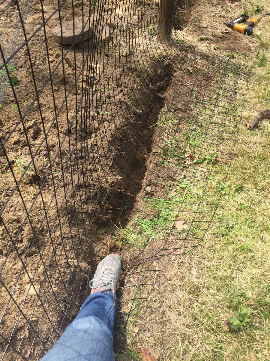 Pushing wire fencing underground to prevent animals from burying under.
