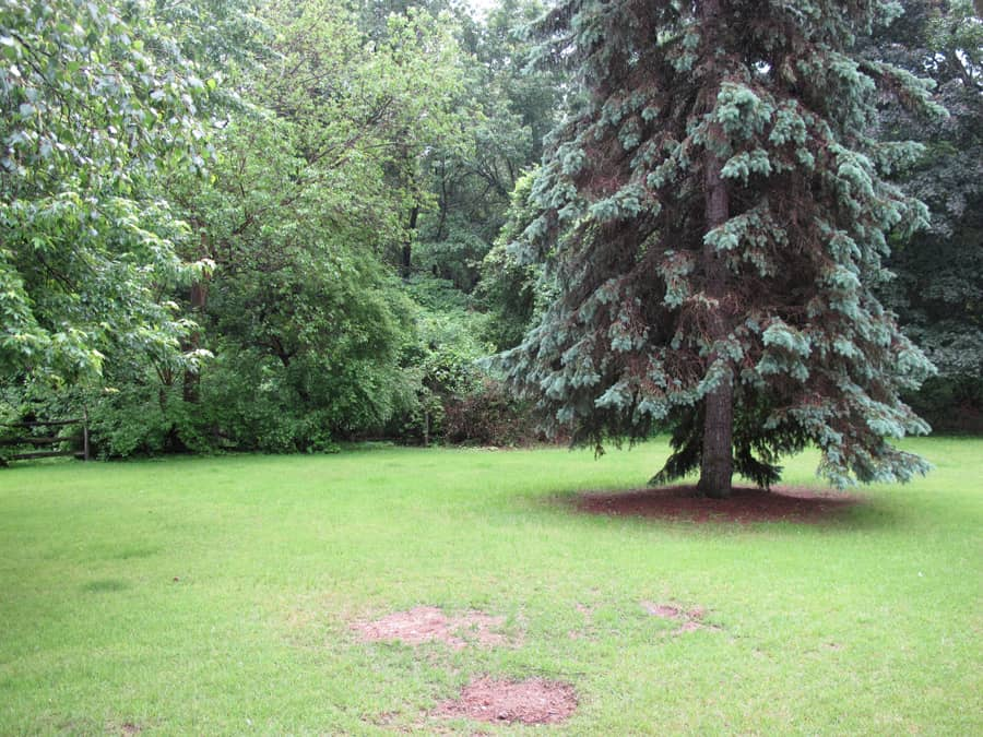 Backyard, before the treehouse was built; June 2013.